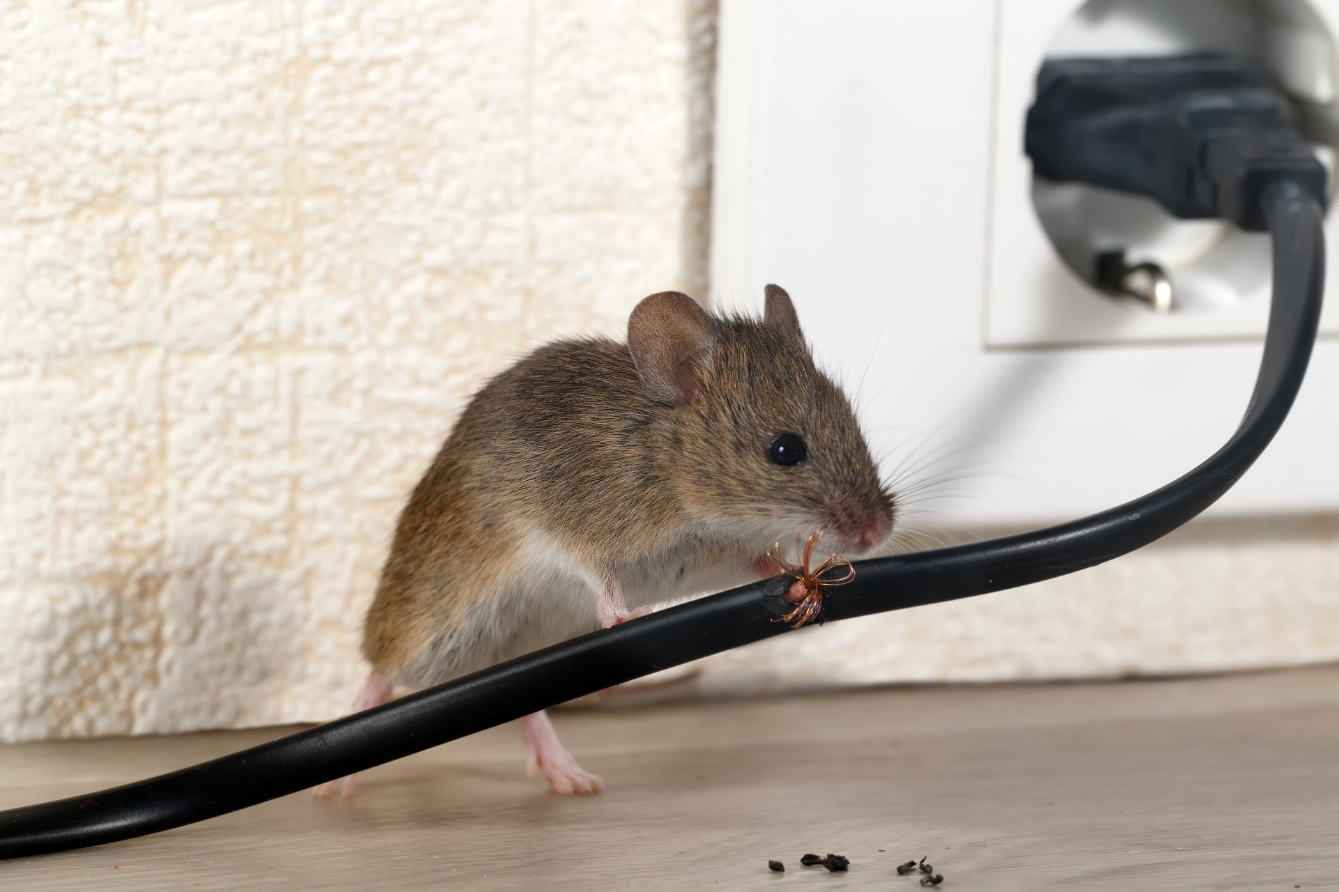 Mice Infestation, Pest Control in Epsom, Horton, Longmead, KT19. Call Now 020 8166 9746