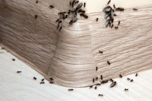 Bed Bugs, Pest Control in Epsom, Horton, Longmead, KT19. Call Now 020 8166 9746